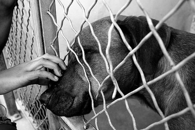 640px-Dog_at_shelter